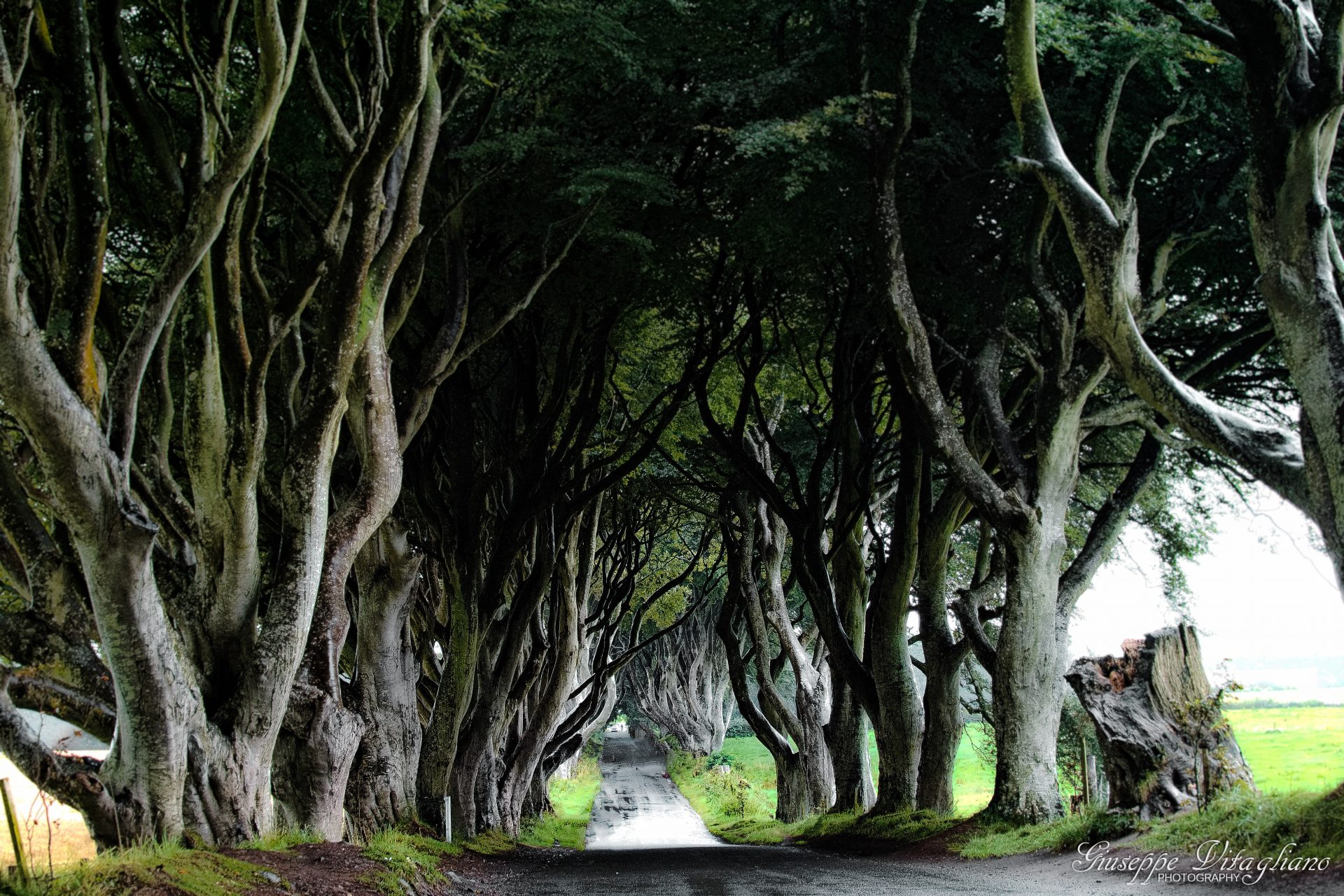 The Dark Hedges - Northern Ireland 2017